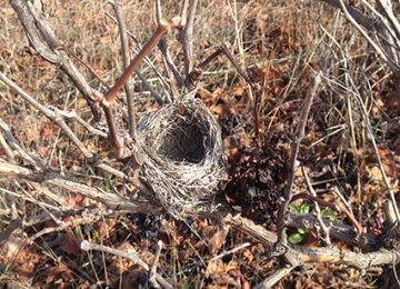 El nido - fotografía - Miguel Sanza